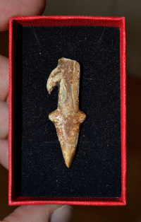 "An Extremely Rare ""Tanged"" half of an Upper Paleolithic ""Magdalenian"" bone, barbed harpoon, France."